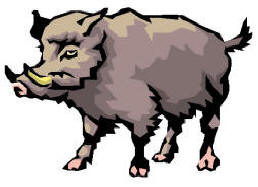 english word wild boar